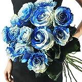 Keland Garten - Duftend Selten 50 Stück Edelrosen Blumensamen Beetrosen mehrjährig winterhart für Ihr Garten, Topf, Terasse, Balkon (Blau)