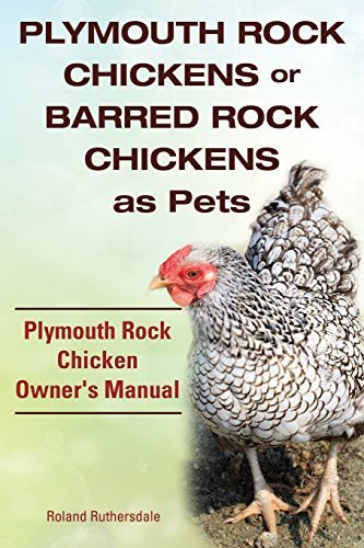plymouth-rock-chickens-or-barred-rock-chickens-as-pets-plymouth-rock-chicken-owners-manual-by-roland