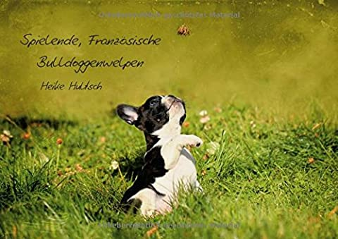 Spielende, Französische Bulldoggenwelpen (Posterbuch DIN A2 quer): Welpen in Aktion (Posterbuch, 14 Seiten ) (CALVENDO Tiere) [Taschenbuch] [Jun 10, 2013] Hultsch, (Aktion Welpen)