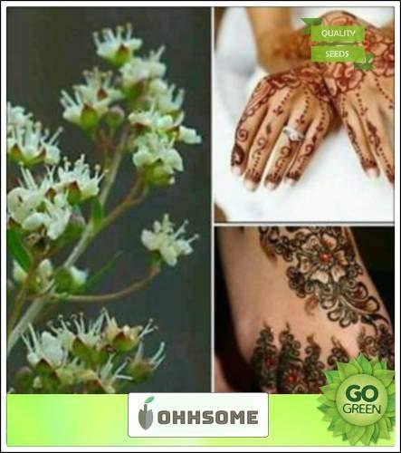 Pinkdose Farbstoff Henna-Baum-Samen Strauch Samen Für Border Seeds Küche Garten Samen Packung Saatgut