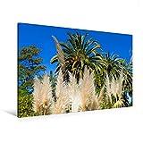 """Special-Edition der Leinwand """"Cortaderia selloana (Pampasgras)"""" im Format """"120x80"""" als perfektes Geschenk oder als Dekoration für das Schlafzimmer, Büro oder Wohnzimmer.Die Hanbury Gärten an der ligurischen Riviera sind sowohl ein wunderschöner Park ..."""