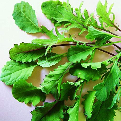 Portal Cool Mesclun - Curly Kale Mix - [! .Healthy 'Supernahrungs' Baby Salatblätter] 400 Samen