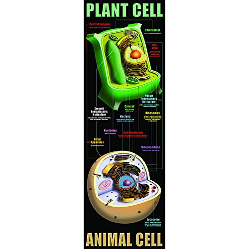 MC-V1632 pflanzlichen und tierischen Zellen ()