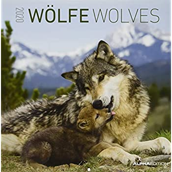 Calendario da muro 30x30 cm wolves 2020