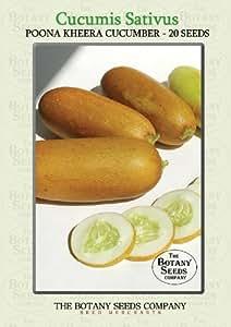 Cucumis Sativus 'Poona Kheera' (20) Graines - Concombre 'Poona Kheera' Semences [Cucumber 'Poona Kheera']