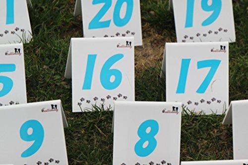 Agility Parcoursschilder Set / 25 Nummernschilder durchnummeriert von 1-22 + A,B,C (vollständiges Turnierset nach FCI) (Cool)