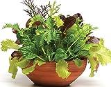 Feinschmecker Salatmischung - Salate - 500 Samen