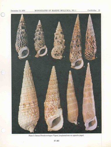 The family Cerithiidae in the Indo-Pacific. Part 1: The genera Rhinoclavis, Pseudovertagus and Clavocerithium.