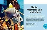 Aquarium, Das große GU Praxishandbuch - 6