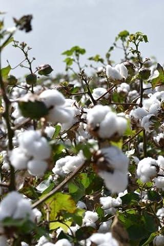 Alabama Cotton Field Close Up Journal: Take Notes, Write Down