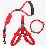 LIZONGFQ Hundehalsband Set für kleine Welpen Haustier Hundehalsband verstellbare Schnalle Gürtel Hundehalsband Traction Dogs liefert S/M/L Größe,Blue,M