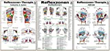 Reflexzonen-Therapie Mini-Poster-Set: Fußsohle & Seiten/Hände/Reflexzonen-Indikationen/3 Mini-Poster