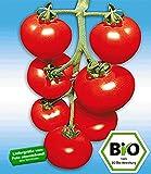 BALDUR-Garten BIO-Stabtomate 'Previa' F1,2 Pflanzen BIO-Tomatenpflanze