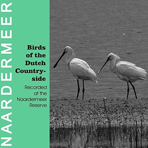 Black Tern (Childonias Niger)