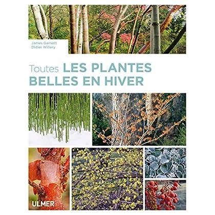 Toutes les plantes belles en hiver