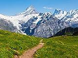 Fototapete Sommerwiese in den Alpen 350cm Breit x 260cm Hoch Vlies Tapete Wandtapete - Tapete - Moderne Wanddeko - Wandbilder - Fotogeschenke - Wand Dekoration wandmotiv24