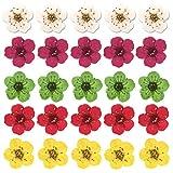 100 Pièces Séchées Pressées Fleurs, 6mm Mixte Couleur Mini Jonquille Naturelles Fleur Sèche Plante Herbier Flowers Stickers Ongle pour Résine Pendentif Bracelet,Couleur Aléatoire 5 Couleurs (B)