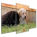 Kunstdruck - Labradorwelpen - 100x60 cm 3 teilig - Bilder als Leinwanddruck - Wandbild von Bilderdepot24 - Tierwelten - Hunde - Haustiere - niedliche Welpen im Gras