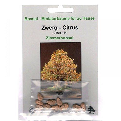 Bonsai - 10 Samen Zwerg-Citrus, Citrus mix, 90022