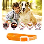 dog anti flea and tick collar,cjmj 90 days effectiveness protection pet repellent collar with natural rubber formula,adjustable 23.6in/60cm length fits for all kinds of dogs and cats Dog Anti Flea And Tick Collar,CJMJ 90 Days Effectiveness Protection Pet Repellent Collar With Natural Rubber Formula,Adjustable 23.6in/60cm Length Fits for all Kinds of Dogs and Cats 51a8iWTHnEL