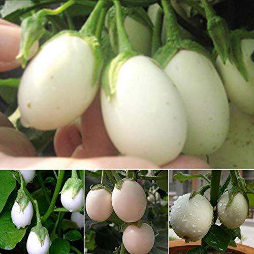 Soteer Garten - Selten Weiße Cherrytomaten Samen Fleischtomate Gemüse Obst Saatgut Tomatesamen ertragreich mehrjährig winterhart für Garten Balkon/Terrasse