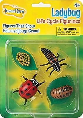 Insect Lore - 48127 - Le cycle de la vie coccinelle