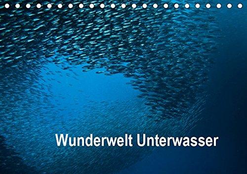 Wunderwelt Unterwasser (Tischkalender 2019 DIN A5 quer): Tauchen in Moaboal/Philippinen (Monatskalender, 14 Seiten ) (CALVENDO Tiere)