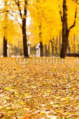"""Alu-Dibond-Bild 80 x 120 cm: """"autumn park"""", Bild auf Alu-Dibond"""