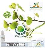 Olivenblatt Olivenbaum - Olea Europaea Mundspray Mit Zerstäuber Kostenlos Nachfüllen