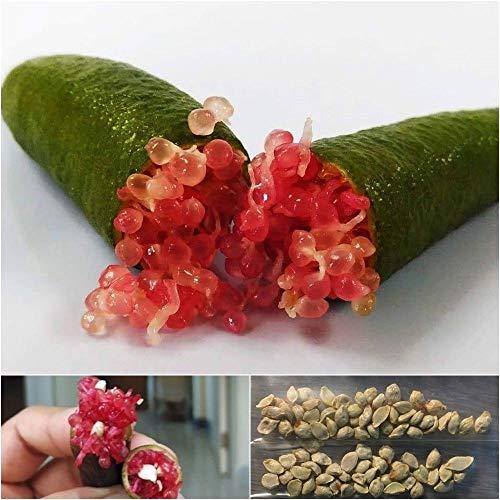 PLAT FIRM GRAINES DE GERMINATION: Finger Lime 10 Samen Citron Kaviar Kalk Seeds Thaïlande Variété\