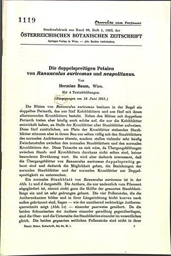 Die doppelspreitigen Petalen von Ranunculus auricomus und neapolitanus.