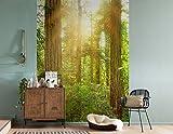 Komar - Vlies Fototapete REDWOOD - 184 x 248 cm - Tapete, Wand, Dekoration, Wandbelag, Wandbild, Wanddeko, Sonnenschein, Wald - XXL2-044