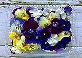 Fiori Commestibili BIOLOGICI - 60 VIOLETTE di colori misti in vaschetta alimentare di 16 cm x 13 cm x 1,5 cm - Coltivati in Toscana dall'azienda agricola Carmazzi