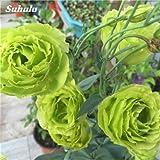 100 pc / sacchetti viola Eustoma Grandiflorum Ophiopogon japonicus Campanulaceae perenne pianta ornamentale per la casa Garden 5 immagine