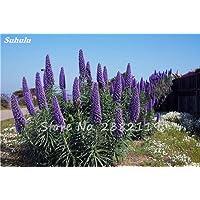 100 semillas de Echium Encanto PC Vulgare planta de flor azul perenne Bonsai aThistle interior plantas de jardín en macetas del jardín de DIY 18