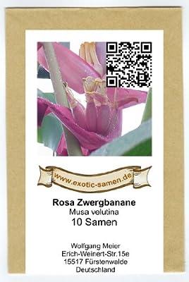 Rosa Zwergbanane (pink velvit-Banane) - Musa velutina - 10 Samen von exotic-samen - Du und dein Garten