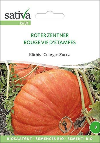 Kürbis Roter Zentner | Bio-Kürbissamen