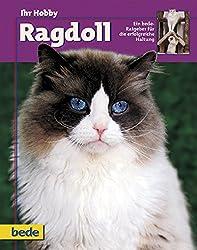 Ihr Hobby Ragdoll.