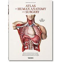 Amazon.es: netter anatomia