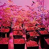 Roseliamono 80W Daylight LED Plant Light Bulb Full Spectrum Ceramic LED UV IR Grow Light E26 Plant Bulb Sunlight White Grow Light for Indoor Garden Farming Greenhouse Grow Walls