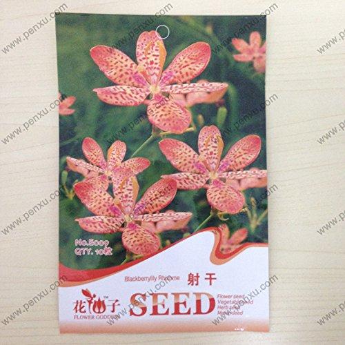 paquet de graines originales Fleurs, graines de rhizome blackberrylily, la floraison à maturité 120 jours, 10 particules de graines / sac
