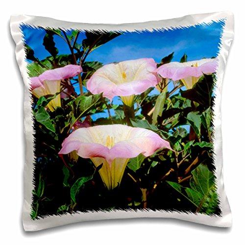 Danita Delimont - Flowers - USA, California, San Diego, Mission Trails Park. Datura Wildflowers. - 16x16 inch Pillow Case (pc_205463_1) (Trails Park Mission)