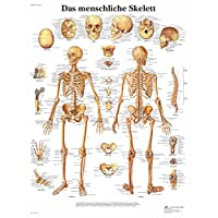 3B Scientific Lehrtafel - Das menschliche Skelett