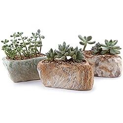 T4U 13.5CM Keramik Sukkulenten Töpfe Kaktus Pflanze Töpfe Mini Blumentöpfe Unregelmäßig 3 Steinforme 3 Stücke Set