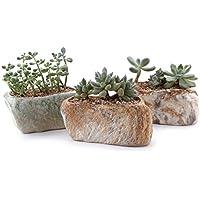 T4U Conjunto de 3 Piedra distintiva Forma Cerámicos Planta Maceta Suculento Cactus Planta Maceta Planta Contenedor Vivero Maceta Macetas de jardín Macetas Envase