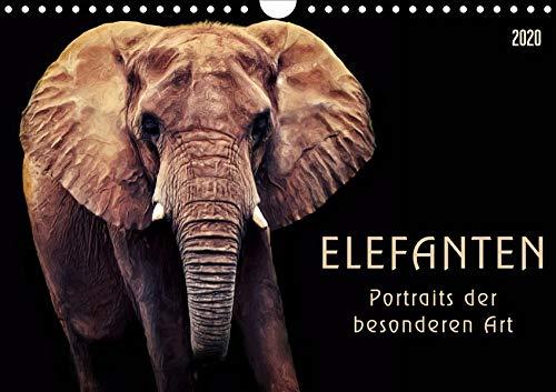 Elefanten - Portraits der besonderen Art (Wandkalender 2020 DIN A4 quer): Wunderbare...