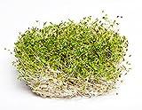 BIO - Semillas de brote de alfalfa - semillas orgánicas certificadas; Alfalfa -