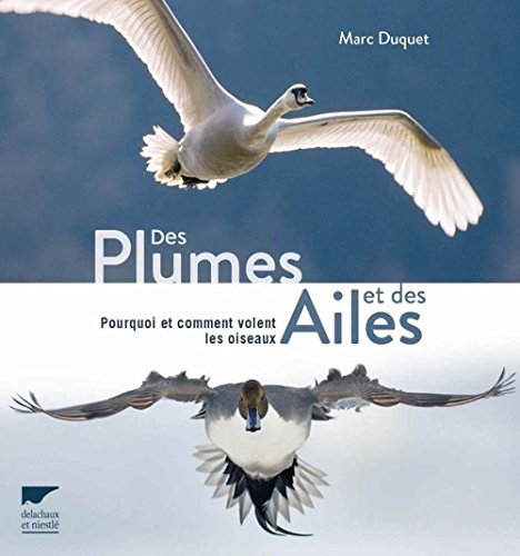 Des plumes et des ailes