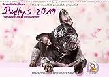 Bullys - Französische Bulldoggen 2019 (Wandkalender 2019 DIN A3 quer): Kleine Hunde mit großem Herz (Monatskalender, 14 Seiten ) (CALVENDO Tiere)