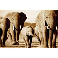 LARGE CANVAS ART ELEPHANTS BROWN/SEPIA READY TO HANG 30 X 20 INCHES (76 cm x 51 cm) mounted and ready to hang preiswert